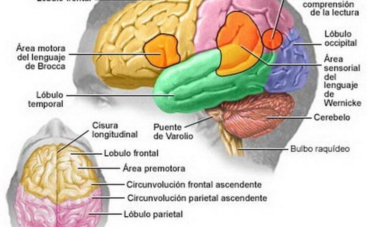 Alzheimer, la epidemia del S. XXI