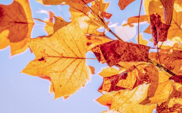 Hábitos saludables: propósitos para el otoño